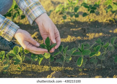 Female farmer's hands in soybean field, selective focus.