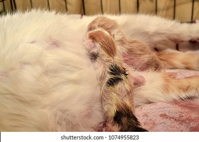 how to tell when a cat will give birth