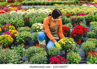 Female florist in flower field