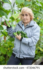 Female gardener collects ripe green cucumbers from branch in the greenhouse in her arms