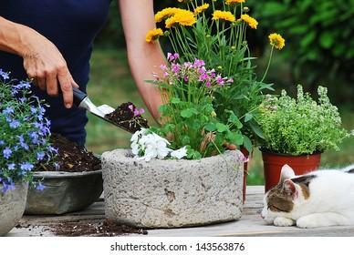 Female gardener planting flowers in a pot