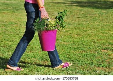 Female gardener walking while holding a bucket full of herbs