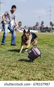 A female German Shepherd dog playing fetch with her owner/trainer on a sunny day at an urban park.