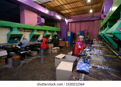 Female glassblowers blowing glass blank making Christmas decorations sitting in a production hall. December 10, 2018. Klavdievo, Ukraine