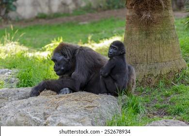 Female gorilla with her child