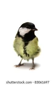 Birdy Song Images, Stock Photos & Vectors | Shutterstock