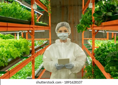 Female greenhouse worker in protective coveralls, mask, gloves, eyeglasses and cap using tablet while looking at you inside vertical farm