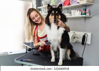 Female groomer brushing Rough Collie dog at grooming salon.