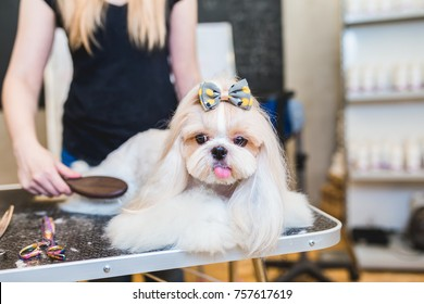 Female groomer brushing Shih Tzu at grooming salon.