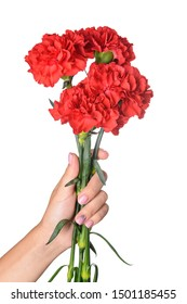 Female hand with beautiful carnation flowers on white background