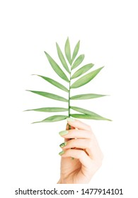 Female hand with beautiful green manicure holding palm plant leaf on a white background.
