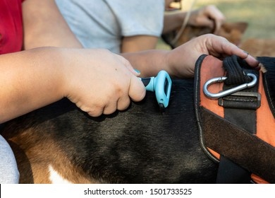 Female hand combs dog fur with a furminator outdoor.