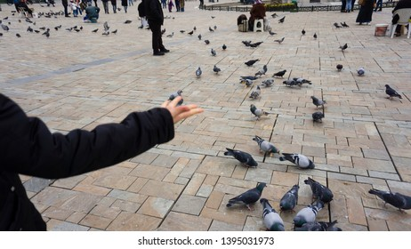 Female hand feeding pigeons at city center. Crowd of pigeons walking and gathering foods and birdseeds Konak square, Izmir.