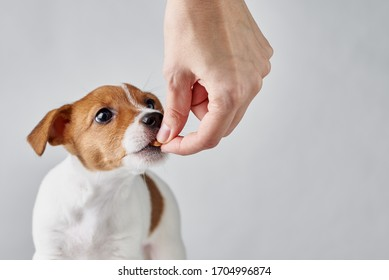 Female hand feeds a dog with dry food