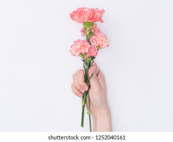 female hand hold carnation