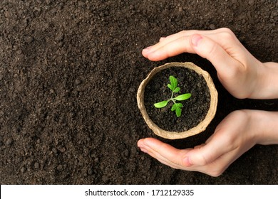 Female hand hold growing seedling in pot at the ground. Eco care concept.