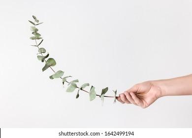 Female hand holding green eucalyptus branch, on neutral background.