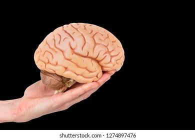 Female hand holding model human brains isolated on black background