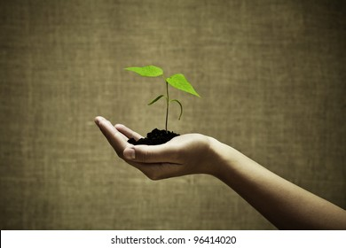 Female hand holding a new green life on burlap background.Focus on hand and plant