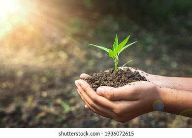 Female hand holding plant growing on soil.environment Earth Day In the hands of trees growing seedlings. Bokeh green Background.