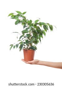Female hand holding a potted plant, isolated on white background