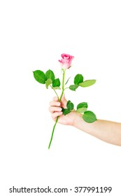Female hand holding a single red rose isolated over the white background