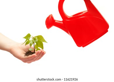 female hand holding a small tree and watering can