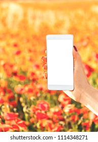 Female hand holding smartphone with empty screen on background of red poppies meadow in summer outdoor, point of view. Mockup.