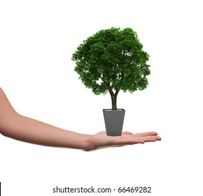 female hand holding a tree in a flowerpot