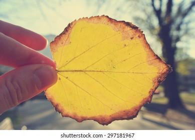 Female hand holding a yellow, golden leaf against the sun, on a sunny afternoon in early autumn. Image filtered in faded, washed out, retro style; nostalgic autumn vintage concept.