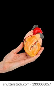 Female hand holds human heart model isolated on black background