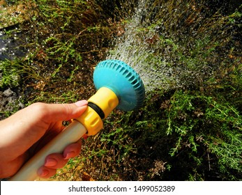 Female hand holds yellow-blue hose watering thyme in garden.