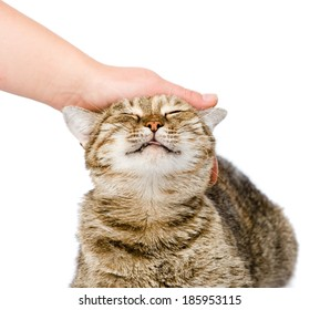female hand patting a happy cat. isolated on white background