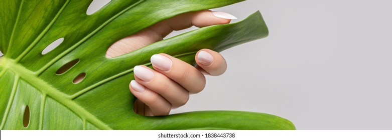 Female hand with pink nail design. Rose nail polish manicure. Female hand hold green leaf on grey background, banner