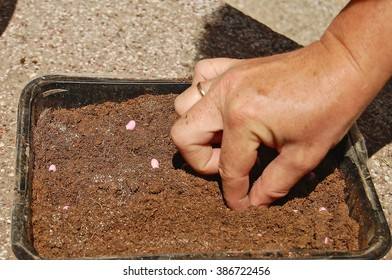 Female hand planted vegetables in a plastic container.