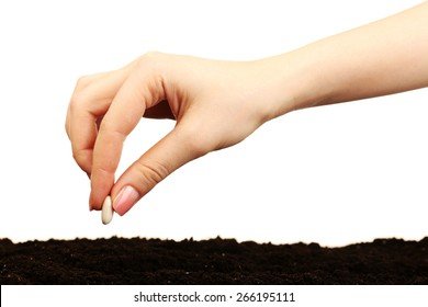 Female hand planting white bean seed in soil isolated on white