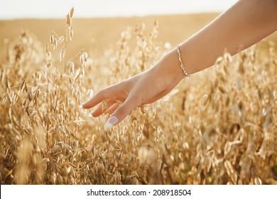 Female hand slide threw ears of wheat in golden sunset light