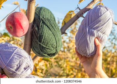 female hand takes a skein of blue yarn from a branch. Blue and green skeins of yarn and a red apple hang on a branch nearby.