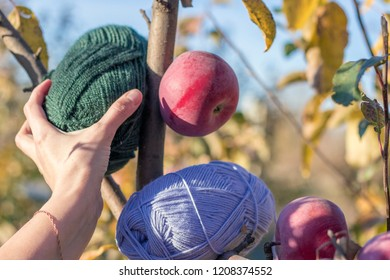 female hand takes a skein of green yarn from a branch. Blue skeins of yarn and a red apple hang on a branch nearby.