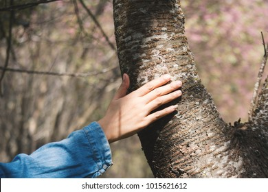 Female hand touching big tree color of hipster tone selective soft focus, concept nature and people