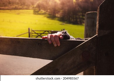 A female hand touching a gate in the countryside