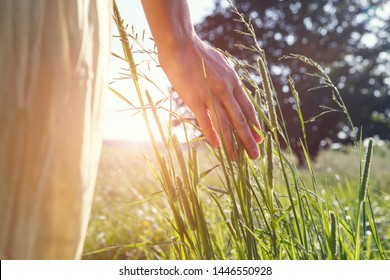 female hand touching grass enjoying nature, sunset light, hot summer day