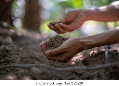 Female Hand Touching The Ground, Checking Quality