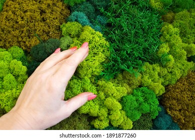 female hand touching stabilized moss close up.