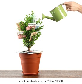 Female hand watering decorative tree in pot with money isolated on white