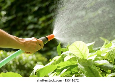 female hand watering the plants with a garden hose with sprinkler
