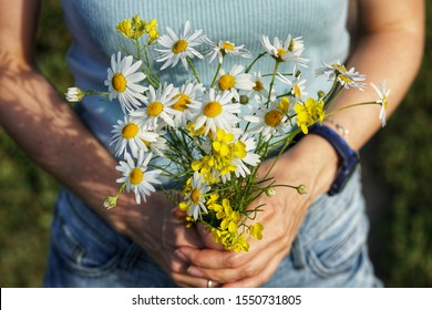 female hands with a bouquet of wildflowers  daisies