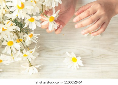 female hands Florist making fashion modern bouquet of daisy flowers . Freshness in the house.