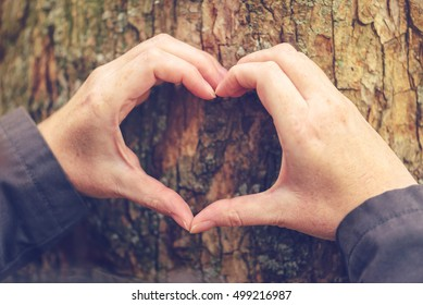 Female hands gesturing heart shape sign on tree trunk, ecology and environment concept for nature lovers