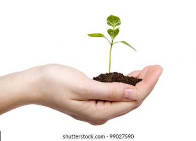 Female hands hold a small sprout and an earth handful